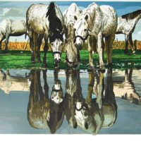 Fran-Bull-Horses-of-the-Camargue-283